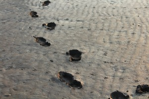 mud footprints