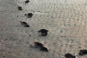 mud footprints