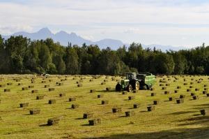 tractor hay