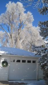 Frosty tree 3