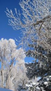 Frosty tree 4