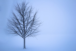 winter bare tree
