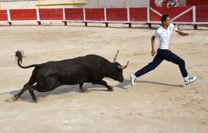 bull 4
