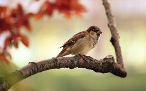 sparrow 8