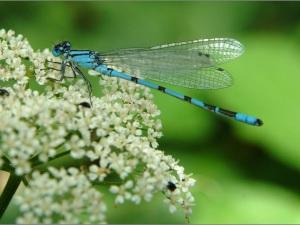 dragonfly-flower-1